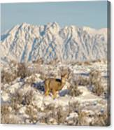 Snow-buck In Wyoming Canvas Print