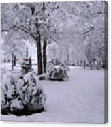 Snow Bush Canvas Print