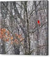 Snow Cardinal Canvas Print