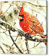Snow Cardinal Canvas Print