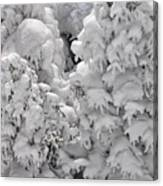 Snow Coat Canvas Print
