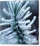 Snow Cover Pine Canvas Print