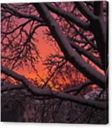 Snow Covered Branches At Sunset Canvas Print