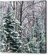 Snow-covered Forest, Wisconsin, Usa Canvas Print