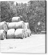 Snow Covered Hay Bales Canvas Print