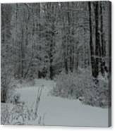Snow Covered Path Into The Woods Canvas Print