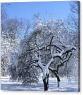 Snow-covered Sunlit Apple Trees Canvas Print