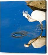 Snowy Egret 6 Canvas Print