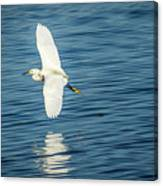Snow Egret In Flight Canvas Print