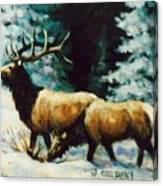 Snow Elk Canvas Print