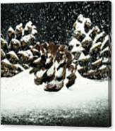 Snow In June Canvas Print