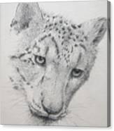 Snow Leopard - Intent Canvas Print