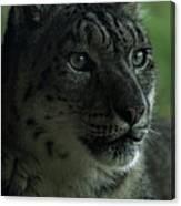 Snow Leopard Canvas Print