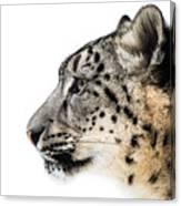 Snow Leopard Xv Canvas Print