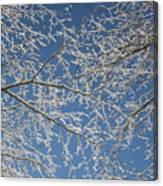 Snow Lined Limbs Canvas Print