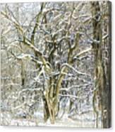 Snow On A Hedge Tree Canvas Print