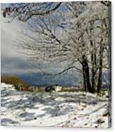 Snow On Beech Mountain  Canvas Print