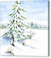 Snow On Evergreens Canvas Print