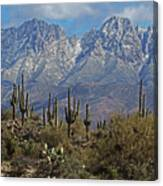Snow On Four Peaks Arizona No Snow On Saguaros Canvas Print