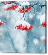 Snow On Red Berries Canvas Print