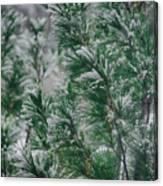 Snow On The Pine Canvas Print