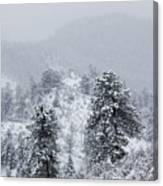 Snow On The Ridge In The Pike National Forest Canvas Print