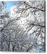 Snow On Trees Canvas Print