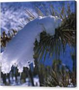 Snow Ornament - Joshua Tree Canvas Print