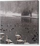 Snow Over Swan Lake Canvas Print