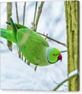 Snow Parrot Canvas Print