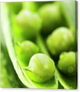 Snow Peas Or Green Peas Seeds Canvas Print