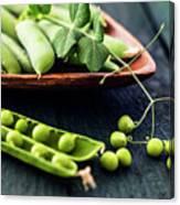 Snow Peas Or Green Peas Still Life Canvas Print
