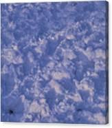 Snow Prints Canvas Print