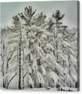Snow Trees  Hdr Canvas Print