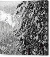 Snow, Trees, Yellowstone Canvas Print