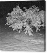 Snow White Tree Canvas Print
