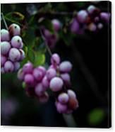 Snowberry 5191 H_2 Canvas Print