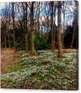Snowdrop Woods 2 Canvas Print