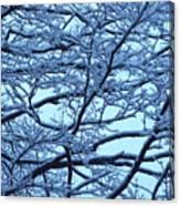 Snowy Branches Landscape Photograph Canvas Print