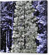 Snowy Day Pine Tree Canvas Print