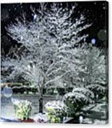 Snowy Dogwood Tree At Night Canvas Print