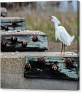 Snowy Egret #2 Canvas Print