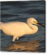 Snowy Egret By Sunset Canvas Print
