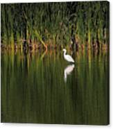 Snowy Egret In Marsh Reinterpreted Canvas Print
