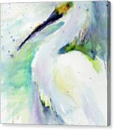 Snowy Egret On Lido Beach Canvas Print