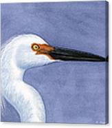 Snowy Egret Portrait Canvas Print