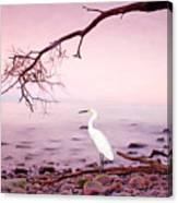 Snowy Egret Solitude Canvas Print