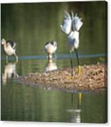 Snowy Egret Stretch 4280-080917-2cr Canvas Print