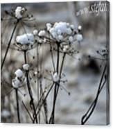 Snowy Flowers  Canvas Print