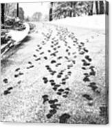 Snowy Footsteps Canvas Print